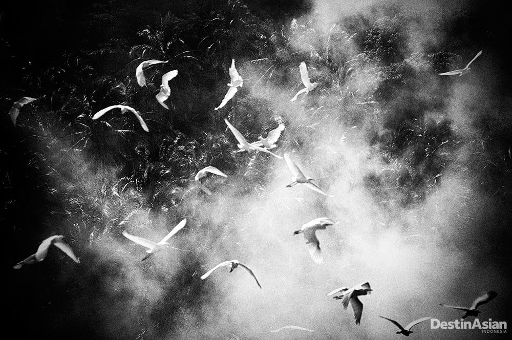 Kawanan burung yang terbang rendah di atas Danau Singkarak.