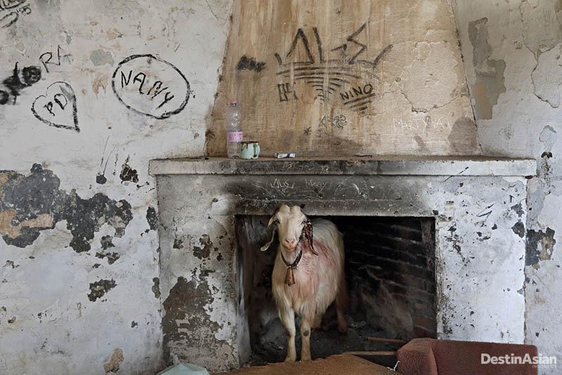 Usai tambang di Sardinia ditutup, buruh mengungsi dan rumah mereka di Asproni berubah menjadi kandang ternak.