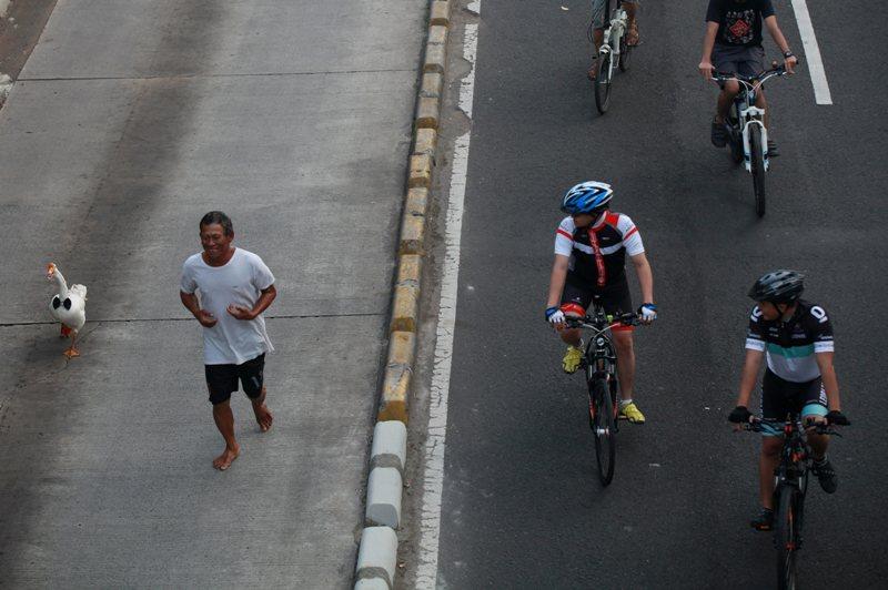 Di Jalan MH. Thamrin, Jakarta, seorang pria berolahraga dengan membawa angsa peliharaannya—foto karya Priyambodo (Kompas). Juara 1 kategori Daily Life APFI 2014.