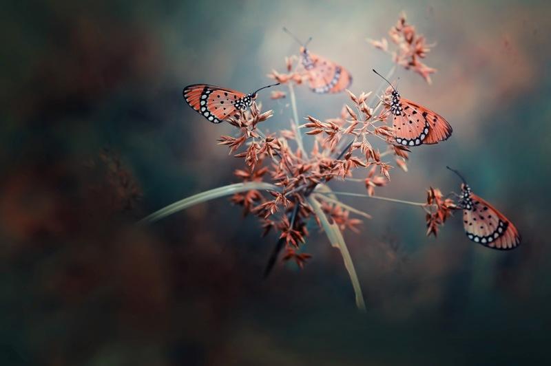 Dinominasikan dalam kategori Nature and Wildlife. Sekumpulan kupu-kupu yang tengah mengerumuni bunga bidikan Harfian Herdi. (Harfian Herdi—2015 Sony World Photography Awards)