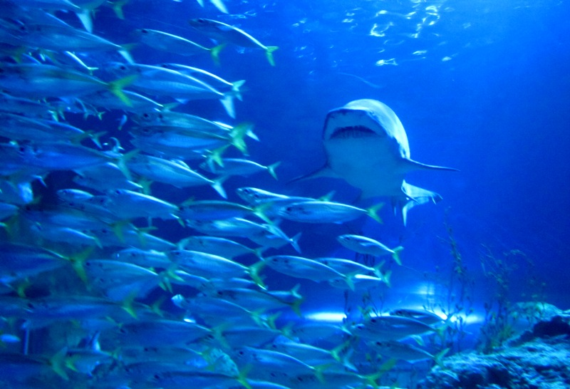 Pada 2011, perdagangan sirip hiu memutar $400-550 juta per tahunnya.