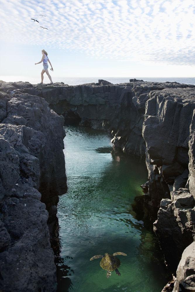 Penyu berenang di antara bebatuan di Galapagos.