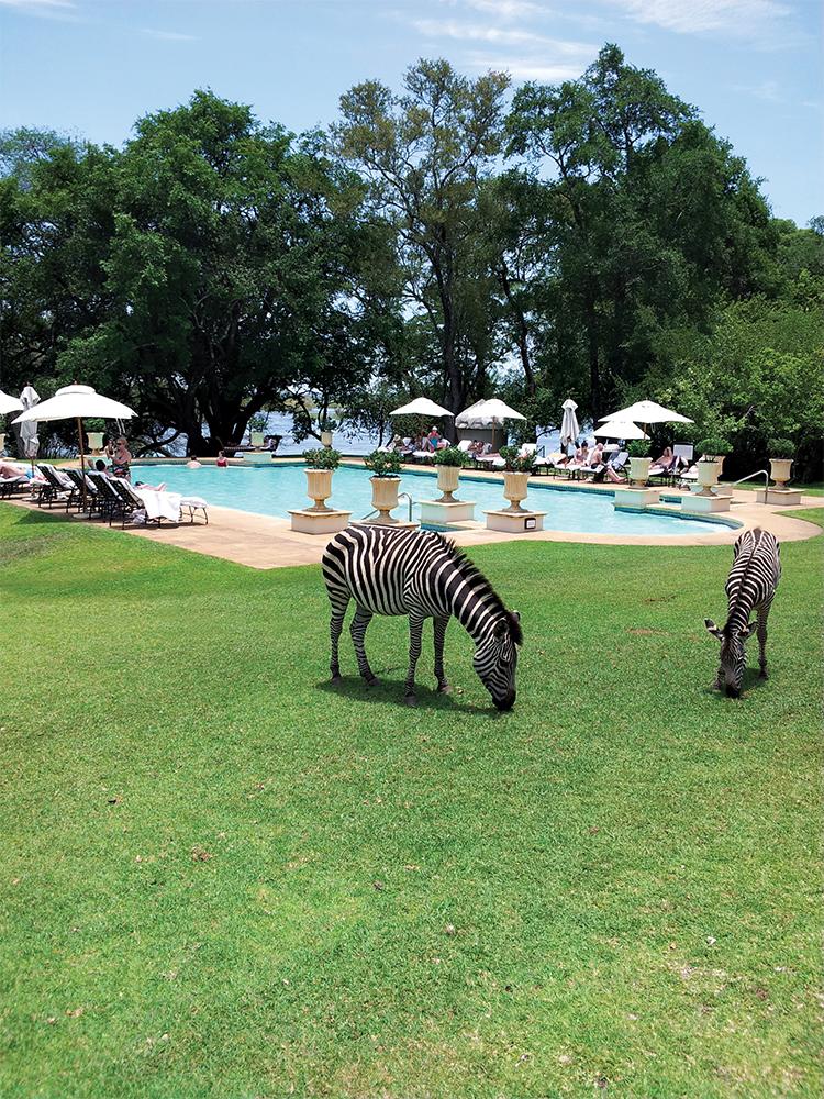 Dua ekor zebra merumput di taman Royal Livingstone, resor tepi sungai yang berada di dekat Victoria Falls.