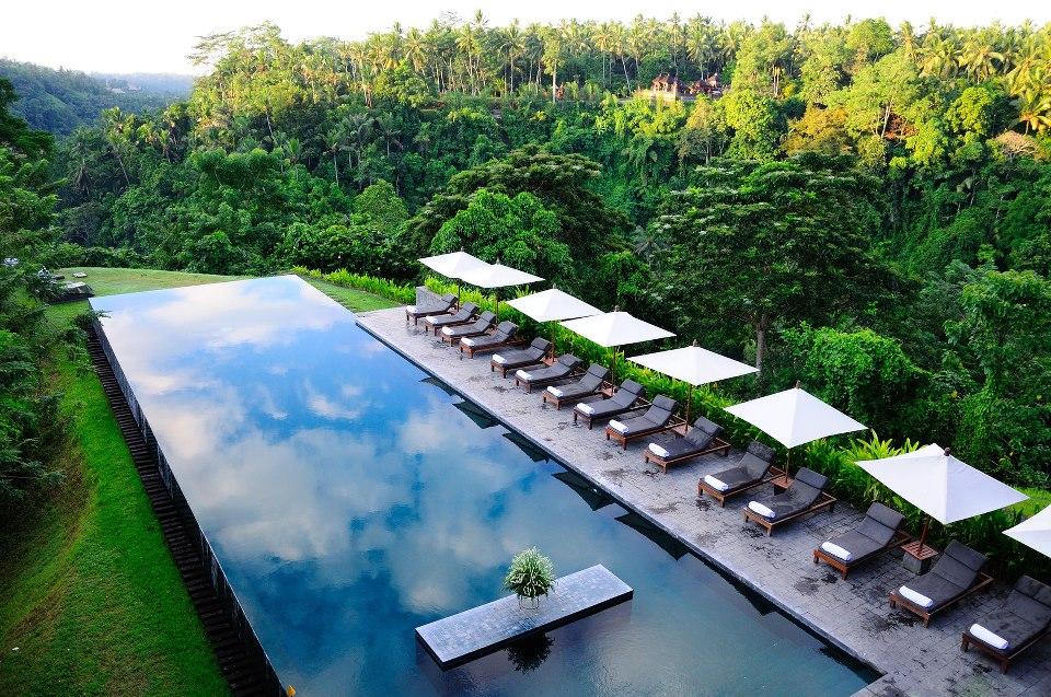 Kolam renang dengan pemandangan pepohonan hijau.