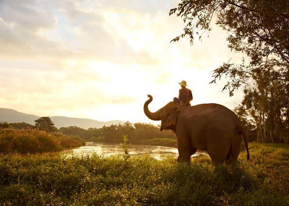 Anantara Golden Triangle memiliki camp untuk gajah.