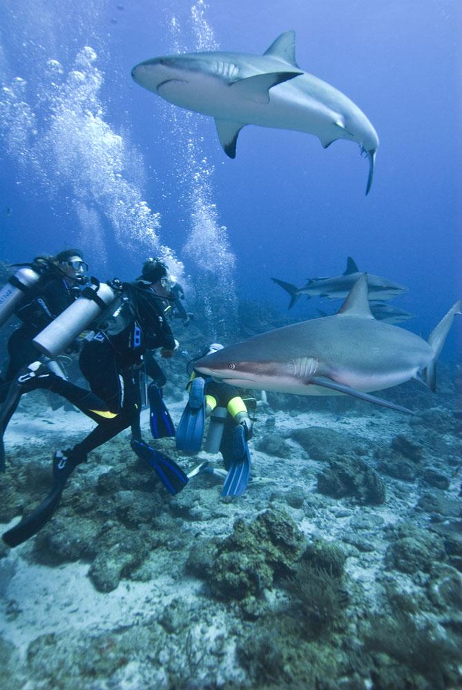 Sejak berdiri pada 2010, SaveSharks rutin mengampanyekan penyelamatan hiu.