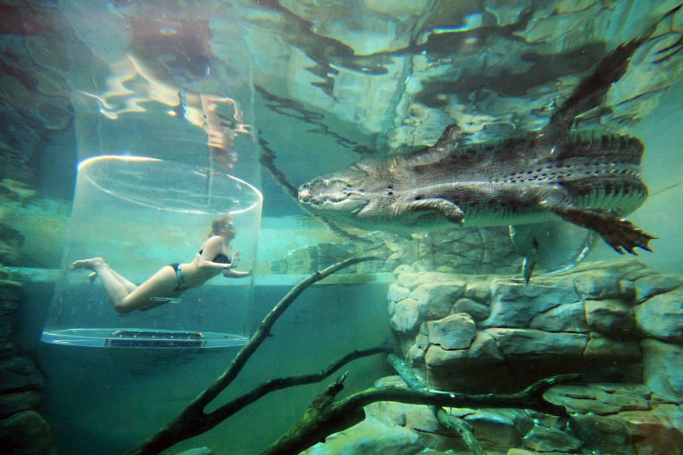 Berenang dengan buaya di Crocosaurus Cove; salah satu atraksi wisata di Darwin.