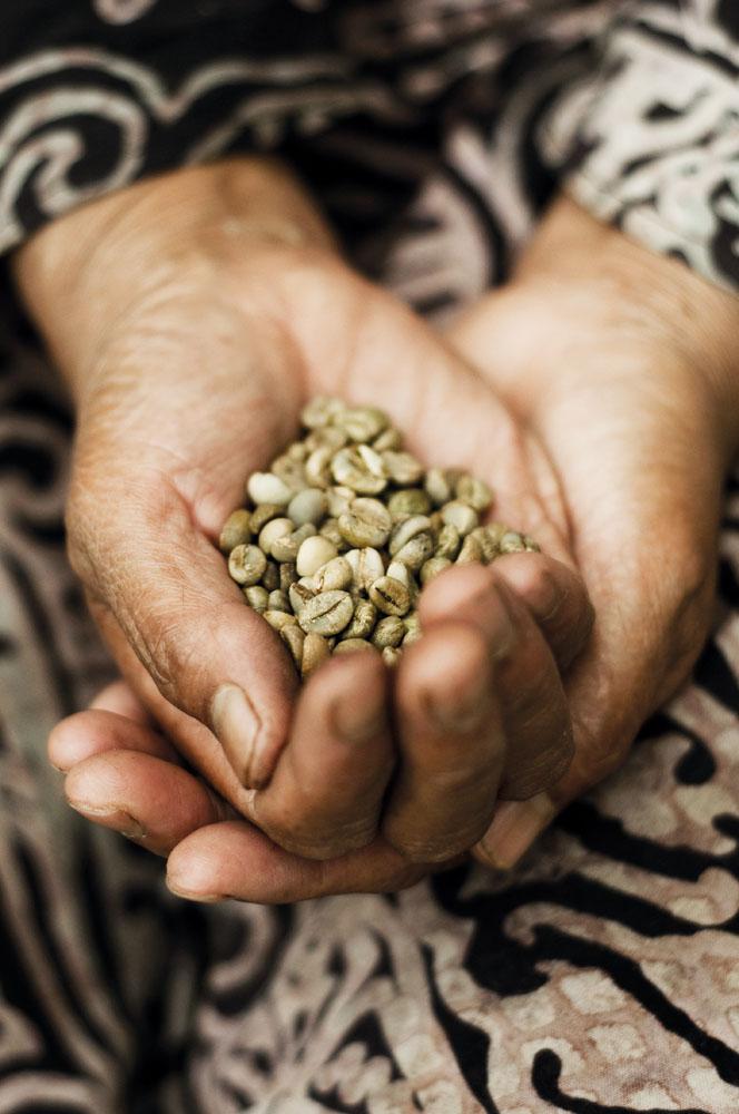 Kopi robusta yang lazim dikonsumsi masyarakat Gayo.