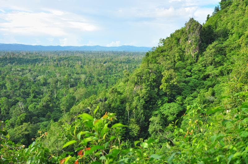Pemandangan hutan lebat Kalimantan di pagi hari dilihat dari mulut Gua Tewet.