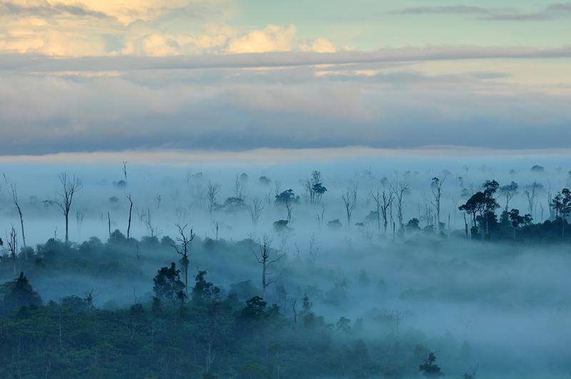 Kabut menyelimuti belantara di sekitar Gua Tewet.