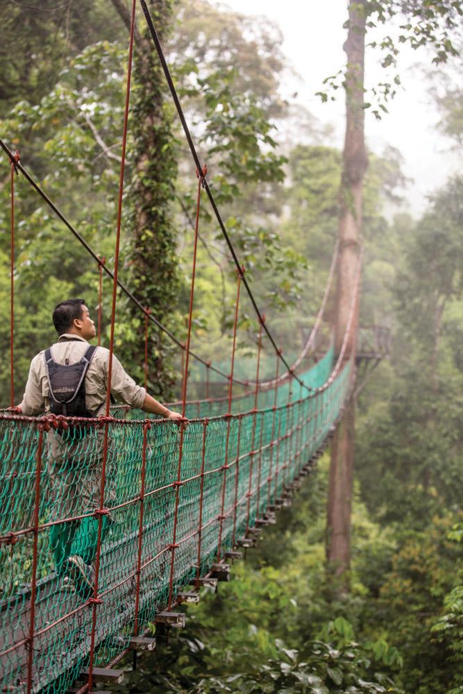 Jembatan gantung setinggi 25 meter untuk observasi sekaligus tempat pengunjung menyaksikan alam sekitar.