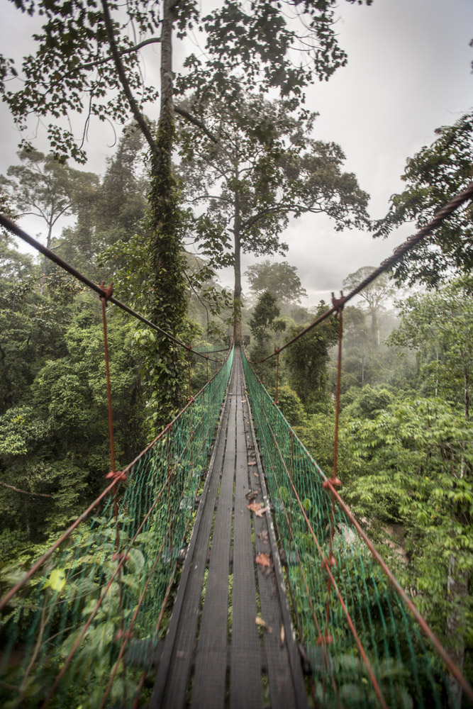 Jembatan gantung yang tak cocok untuk orang yang mengidap fobia ketinggian.