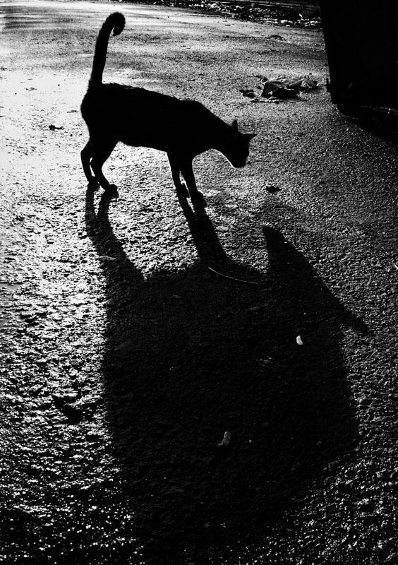 Seekor kucing dan bayangannya.