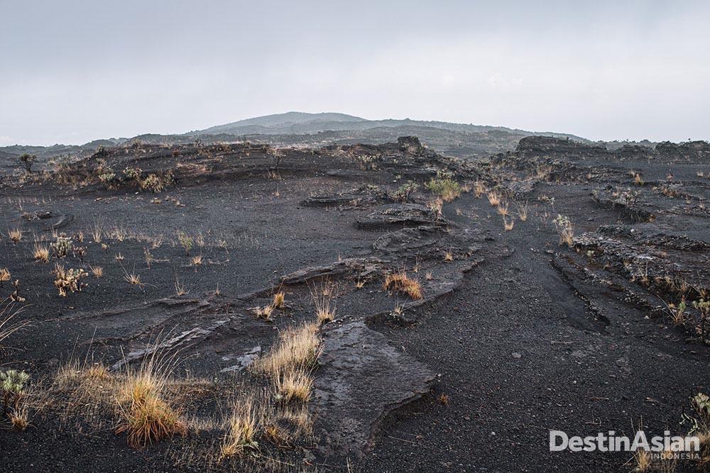 Lanskap Gunung Tambora yang diselimuti pasir.