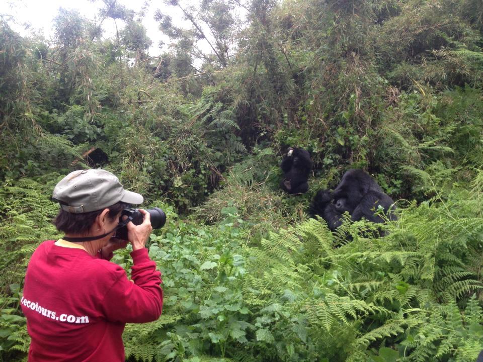Melihat gorila di habitat aslinya secara langsung.