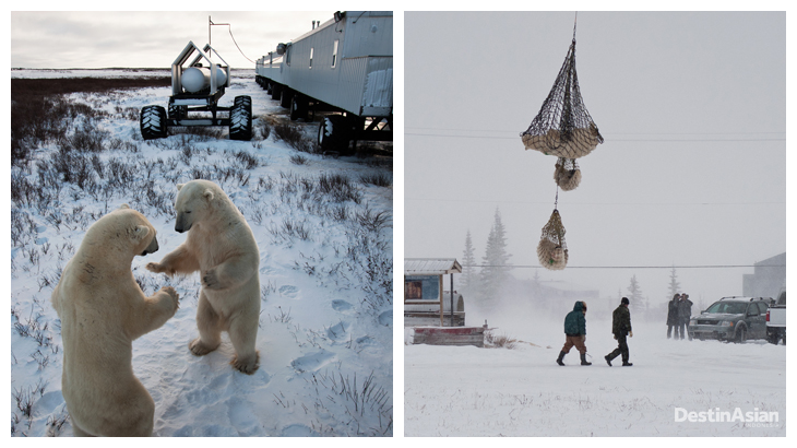 Great White Bear Tours 02