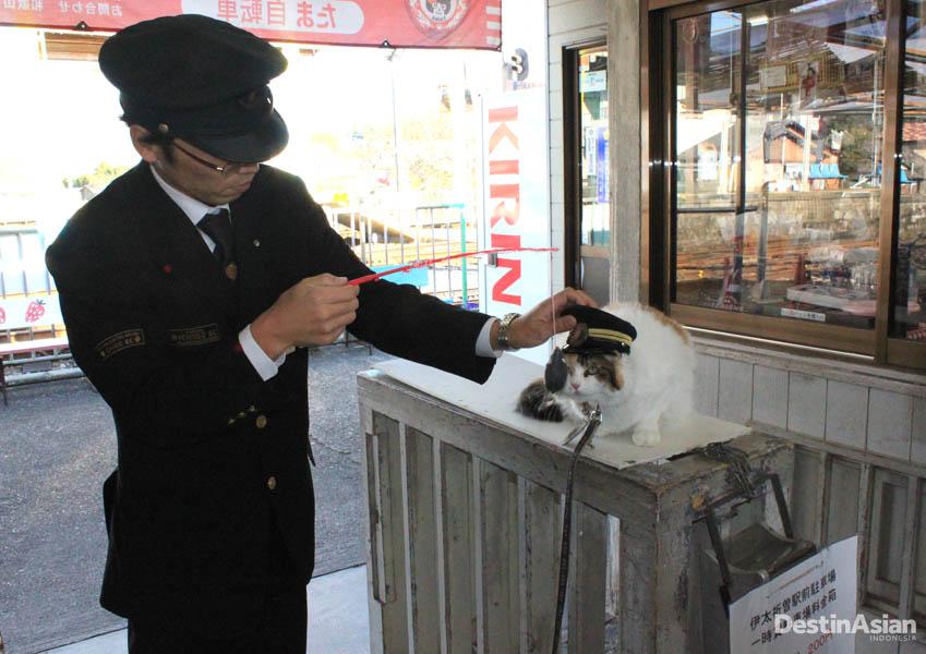 Kucing primadona turis di Stasiun Itakiso.