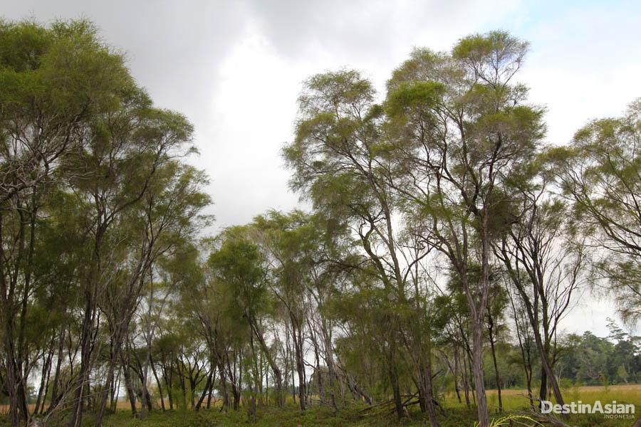 Pohon-pohon tinggi menjadi habitat alami burung.