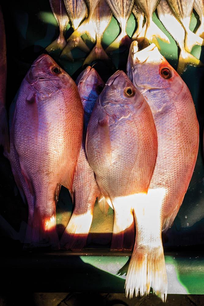 Detail ikan kakap merah dipotret dengan speed 1/200.