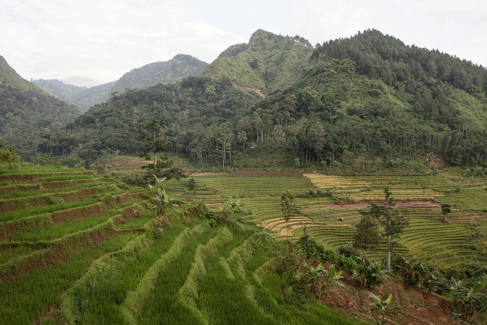 Sawah terasering di dekat Candi Selogriyo.