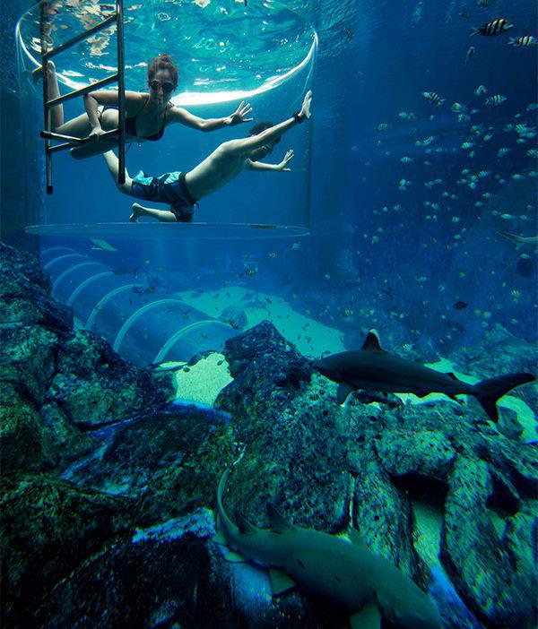 Berenang dengan ikan hiu. Salah satu atraksi yang bisa dilakukan di Marine Life Park.
