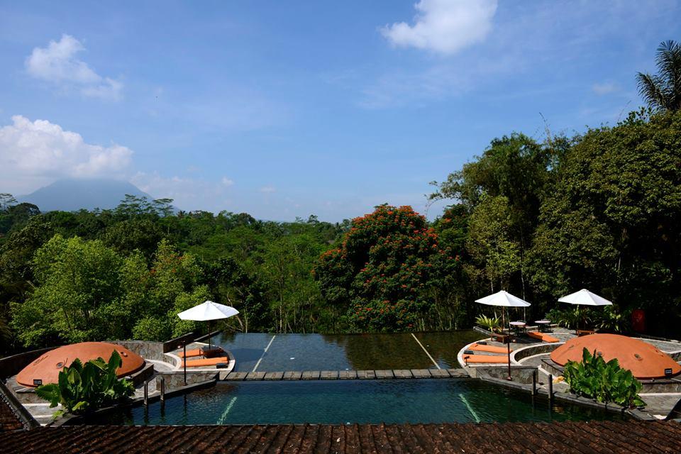 Kolam renang dengan pemandangan hutan hijau.
