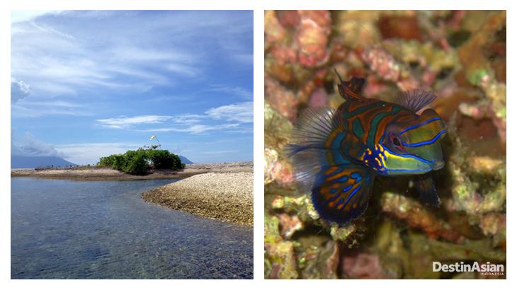 Pulau Pastofiri; atoll di sekitar Jailolo. Bawahnya kaya akan biota laut yang indah.