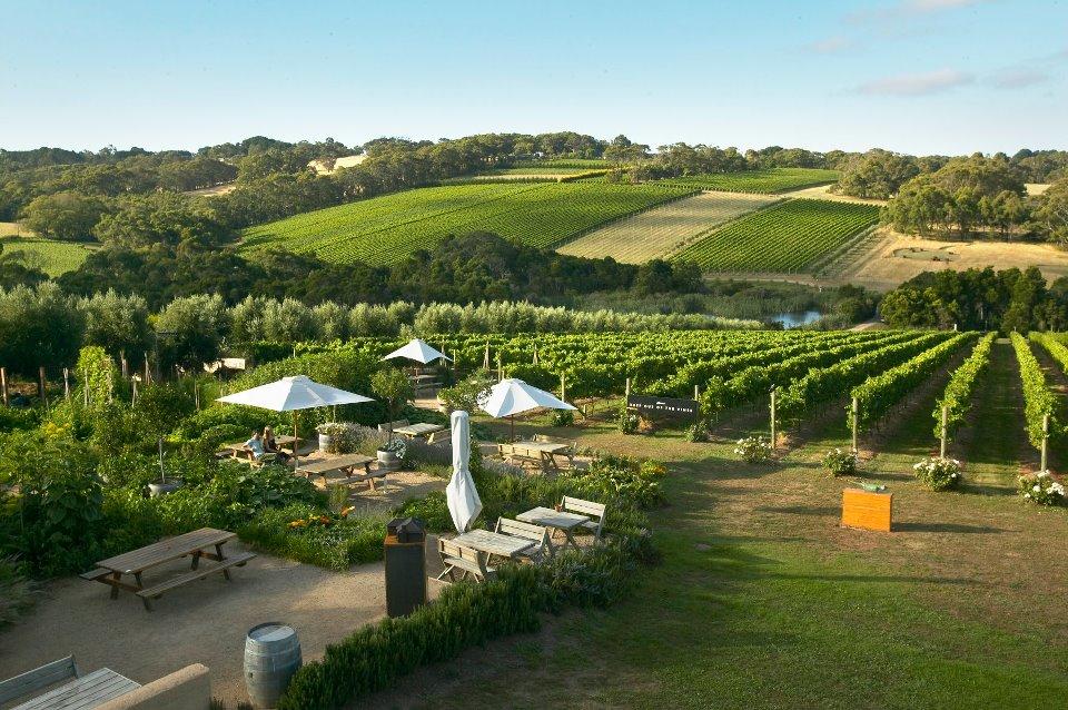 Pemandangan di Montalto Vineyard & Olive Grove. (foto: dokumen restoran)