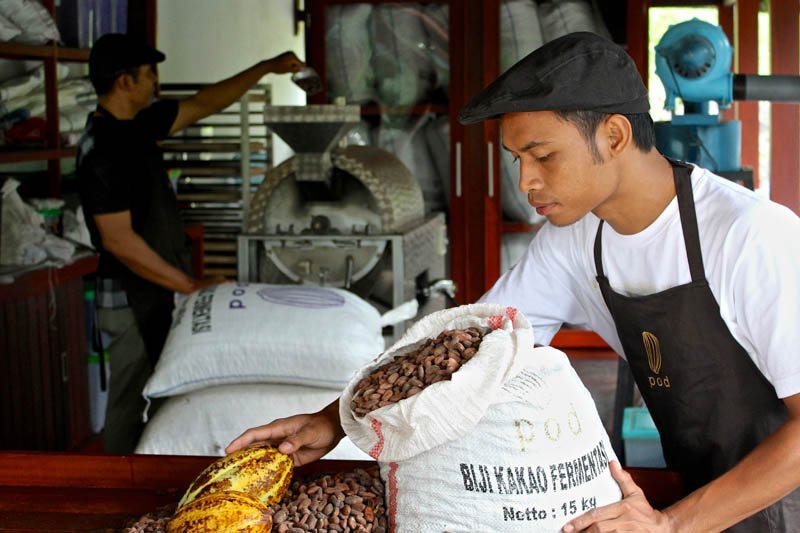Salah seorang pegawai POD Chocolate sedang memisahkan biji cokelat.