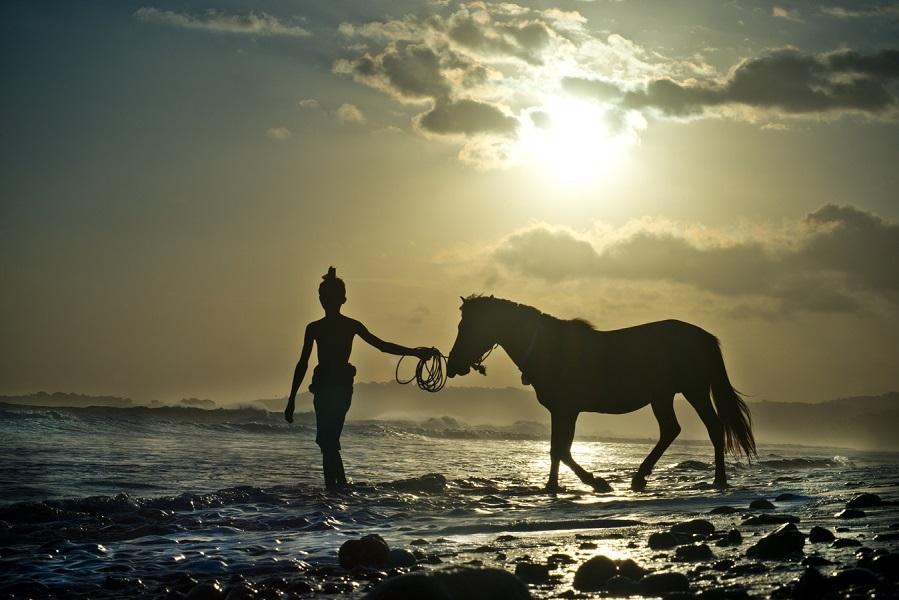 Selain alamnya yang indah, kuda juga menjadi daya tarik utama di Sumba.