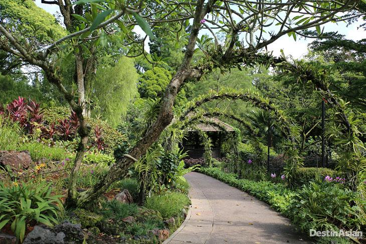 Interior Orchid Garden. Tempat ini mengantongi lebih dari 60 ribu jenis anggrek.