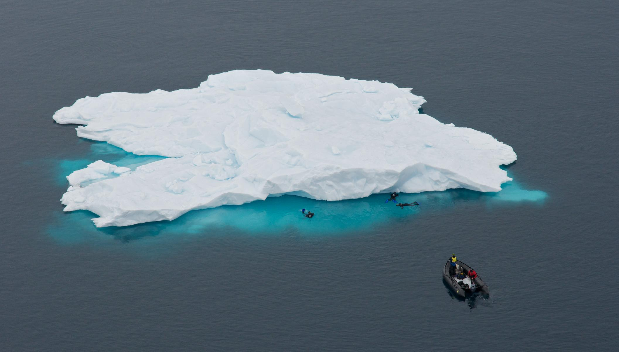 Snorkeling di Antartika. (Foto oleh Karen Hinchliffe)