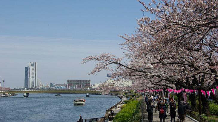 Taman Sumida di Asakusa yang ramai di musim Sakura.