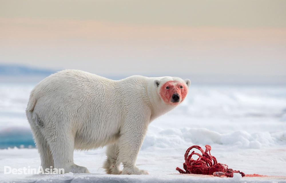 Foto yang diambil di Svalbard, Arktika, oleh Joshua Holko ini dipuji dewan juri berkat kontras dan pancaran energinya.