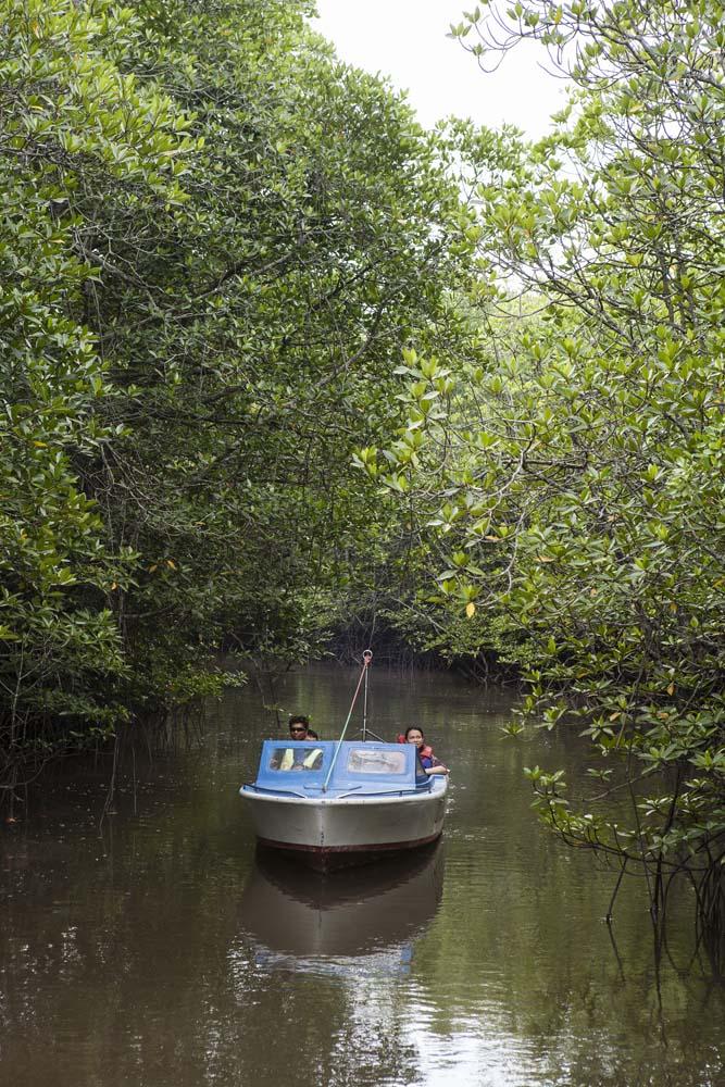 Menyusuri Nongsa Mangrove dengan menggunakan perahu.