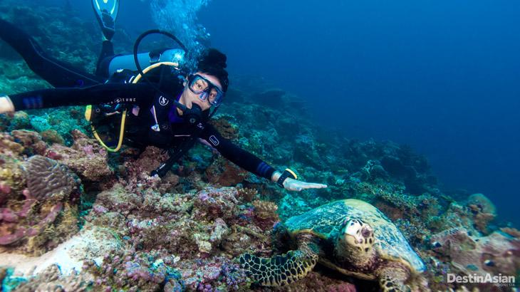 Kelly Tandiono saat melakukan penyelaman di Maladewa.