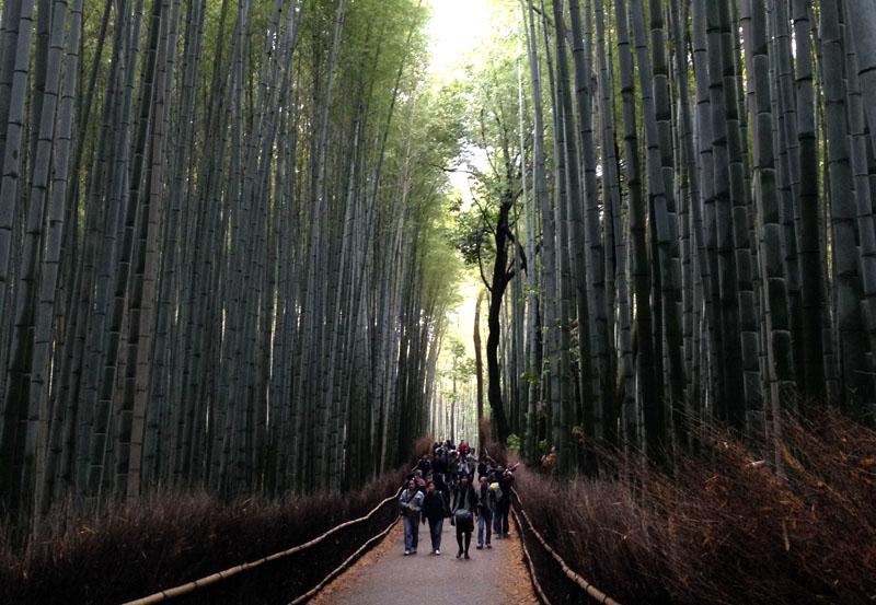 Hutan bambu di Arashiyama yang menjadi obyek wisata populer. (Foto: Tina Sindukusumo)
