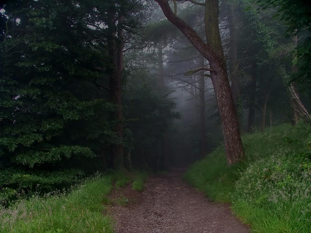 Hutan di perbukitan Cavehill di Belfast.