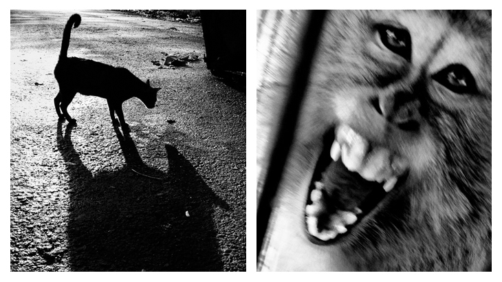 kucing dan monyet