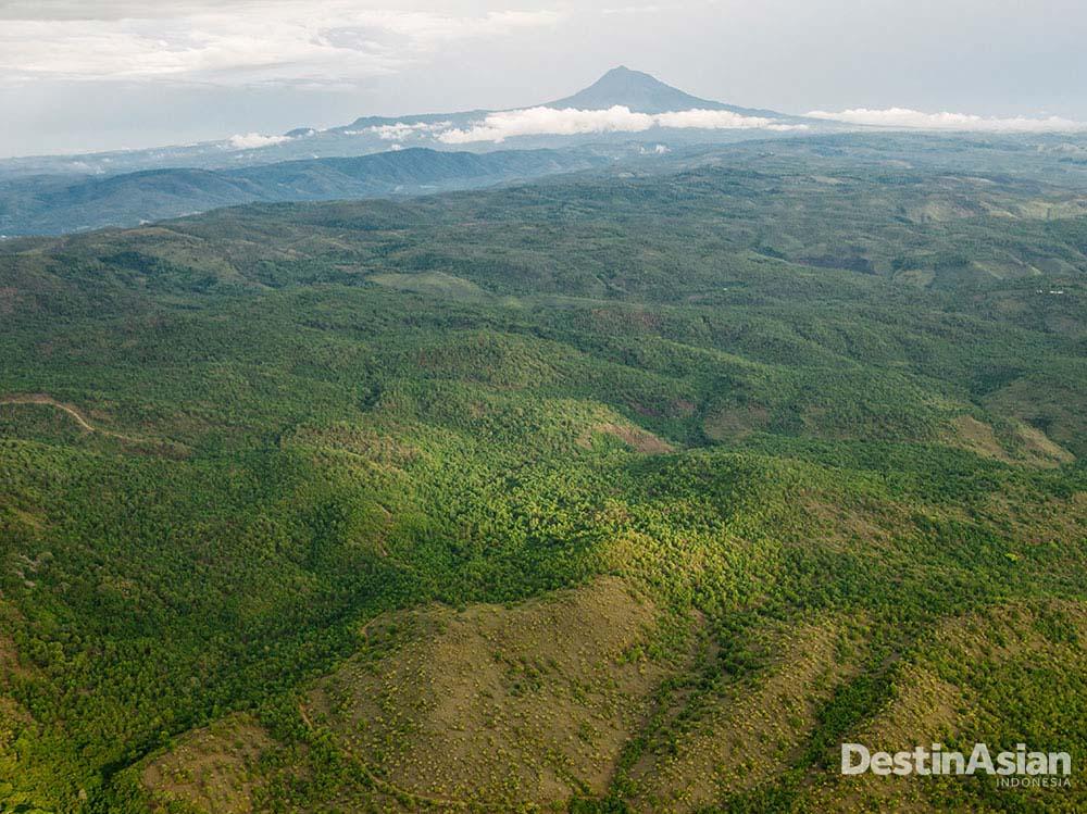 Hutan hijau di Aceh yang terancam penggundulan hutan masif.