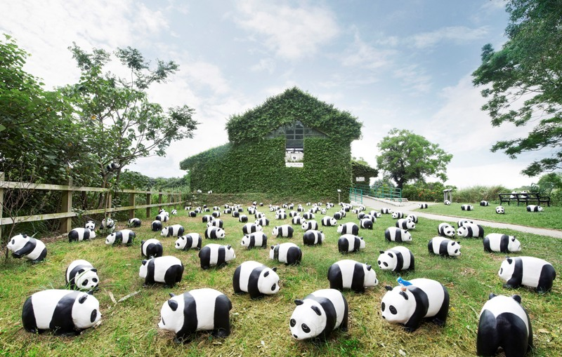 Para panda di halaman Mai Po Nature Reserve yang dikelola oleh WWF.