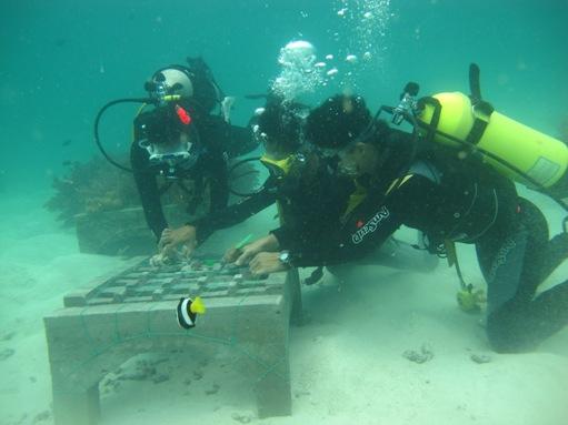 Salah satu kegiatan Marine Buddies berupa program pemulihan alam bawah laut.