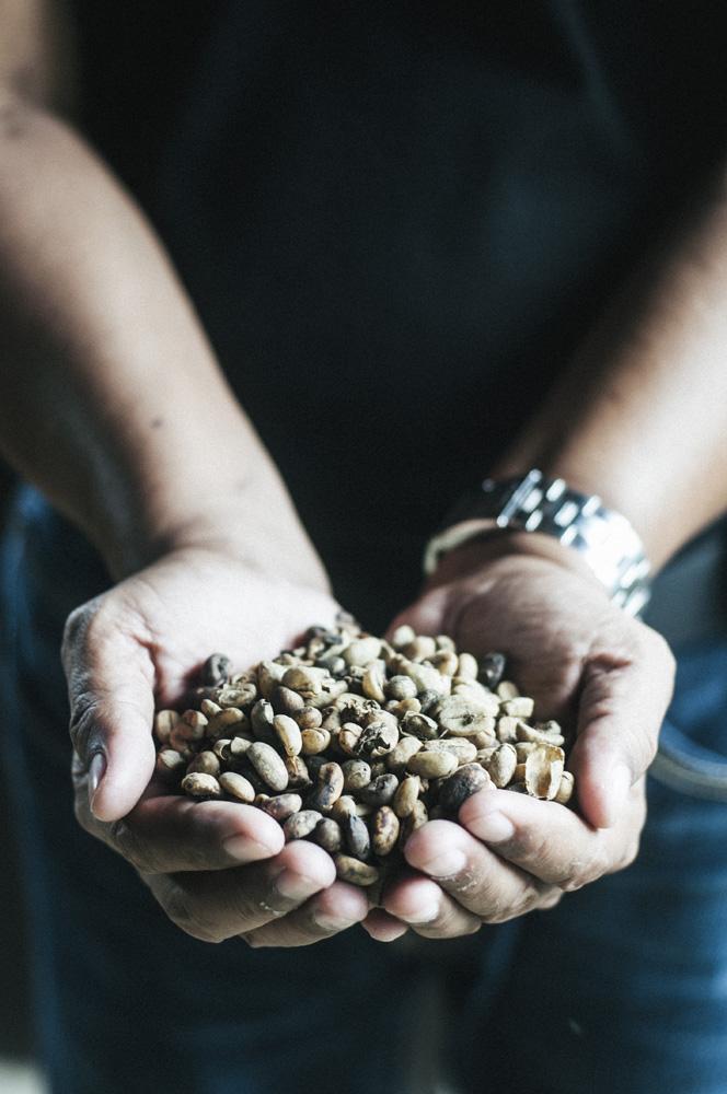 Kopi luwak di salah satu sentra perkebunan kopi di Kintamani.