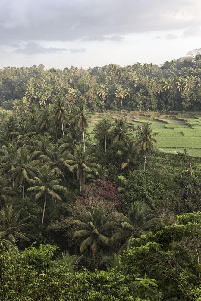 Pemandangan lanskap Ubud dari Hotel Bambu Indah.