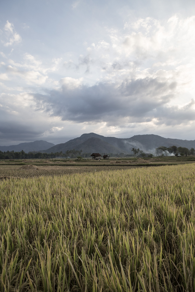 Pemandangan persawahan di pedesaan Sumbawa.