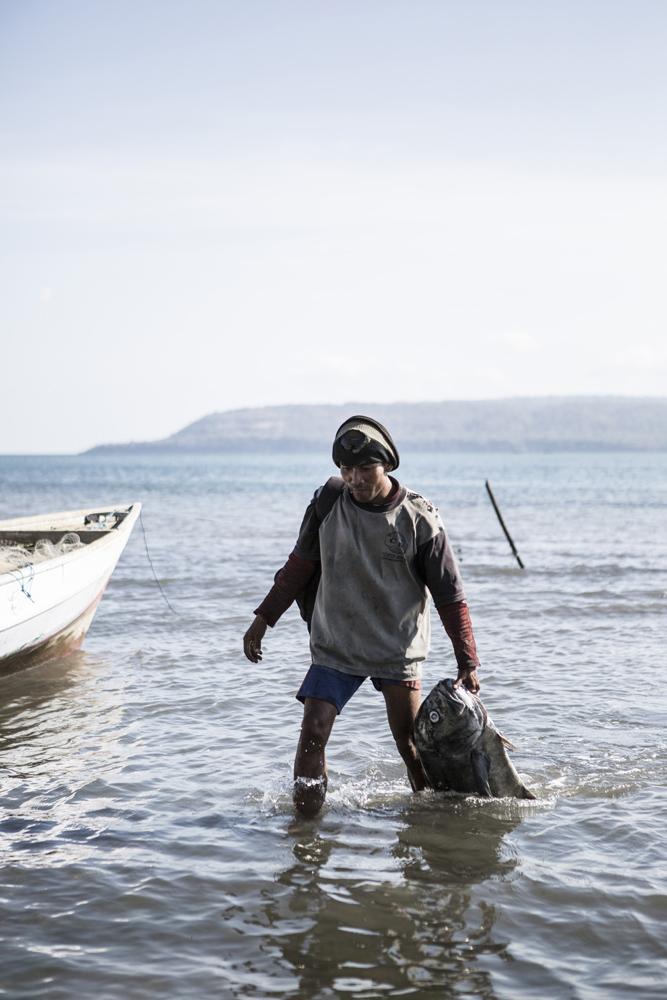 Seorang nelayan membawa hasil tanggkapannya di Desa Labuhan Sauh.