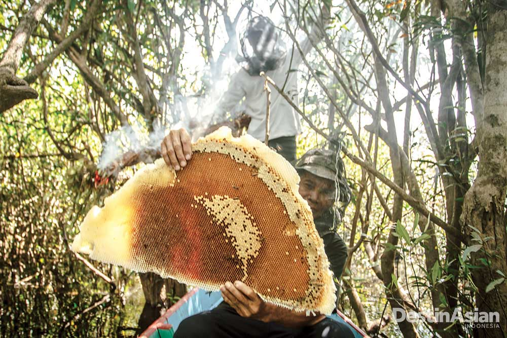 Petani memanen madu hutan dari dahan buatan yang dipasang di ketinggian empat meter dari permukaan danau di kawasan Desa Leboyan (Atet Dwi Pramadia).