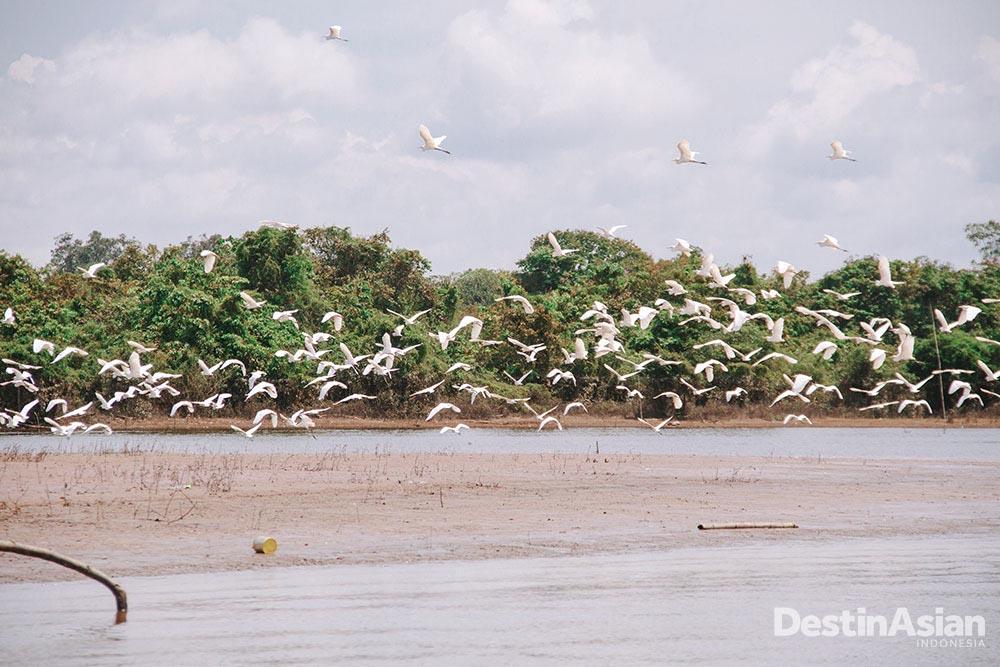 Burung-burung melintasi Sungai Kapuas di Desa Suhaid (Atet Dwi Pramadia).