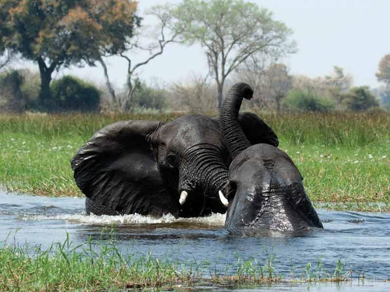 Banjir tahunan Sungai Okovango hadir setiap musim kemarau, membawa berkah bagi satwa-satwa sekitarnya.